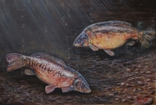 MARY & MARY'S MATE - FROM A SERIES OF A3 PRINTS OF LEGENDARY CARP  -