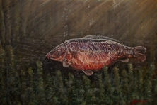 THE BISHOP - FROM A SERIES OF A3 PRINTS OF LEGENDARY CARP -