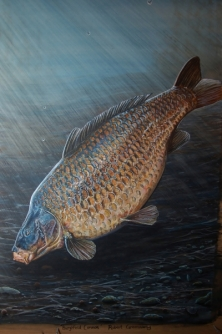 THE BURGHFIELD COMMON - FROM A SERIES OF LEGENDARY CARP -