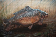 THE ROYAL FORTY - FROM A SERIES OF LEGENDARY CARP -