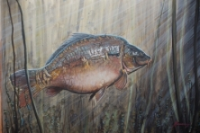 JUMBO - FROM A SERIES OF LEGENDARY CARP -