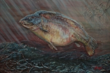 HEATHER - FROM A SERIES OF A3 PRINTS OF LEGENDARY CARP -