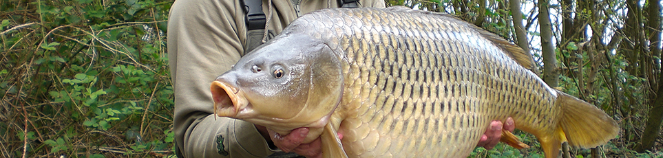 http://www.bigcarpmagazine.co.uk/images_design/mainimage2.jpg